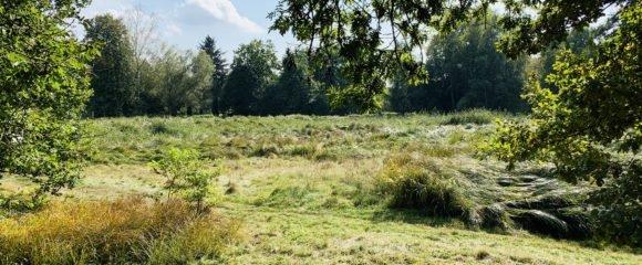 Prodej pozemku 8 236 m2 – Malšovice