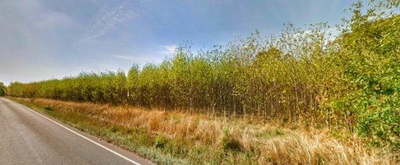 Prodej orné půdy osázené Japonským topolem, 14 241 m2 – Rasošky
